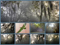 Lanark MORNING X9_Collage