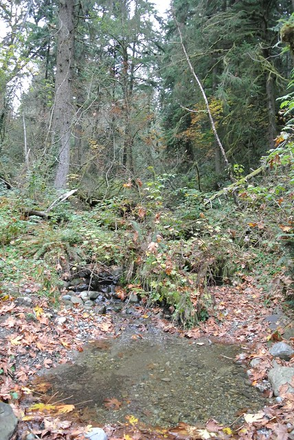 An Autumn Mixed-Terrain Ride - Pools on a feeder creek to the Raging River