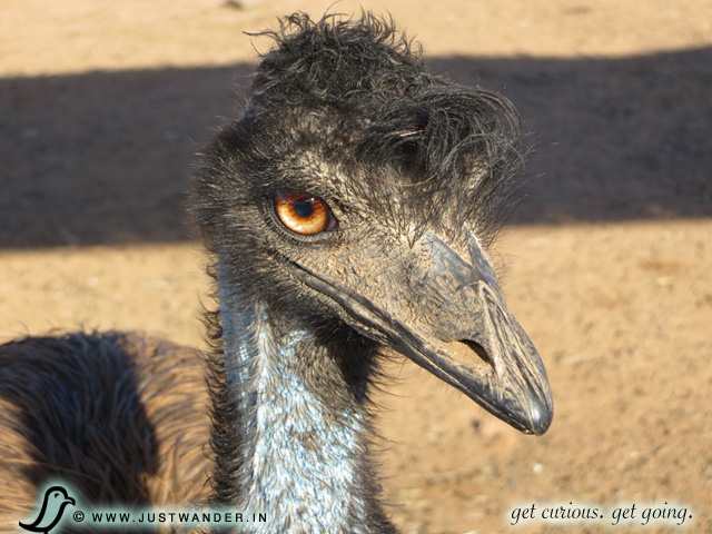 PIC: Out of Africa Wildlife Park - Ostrich