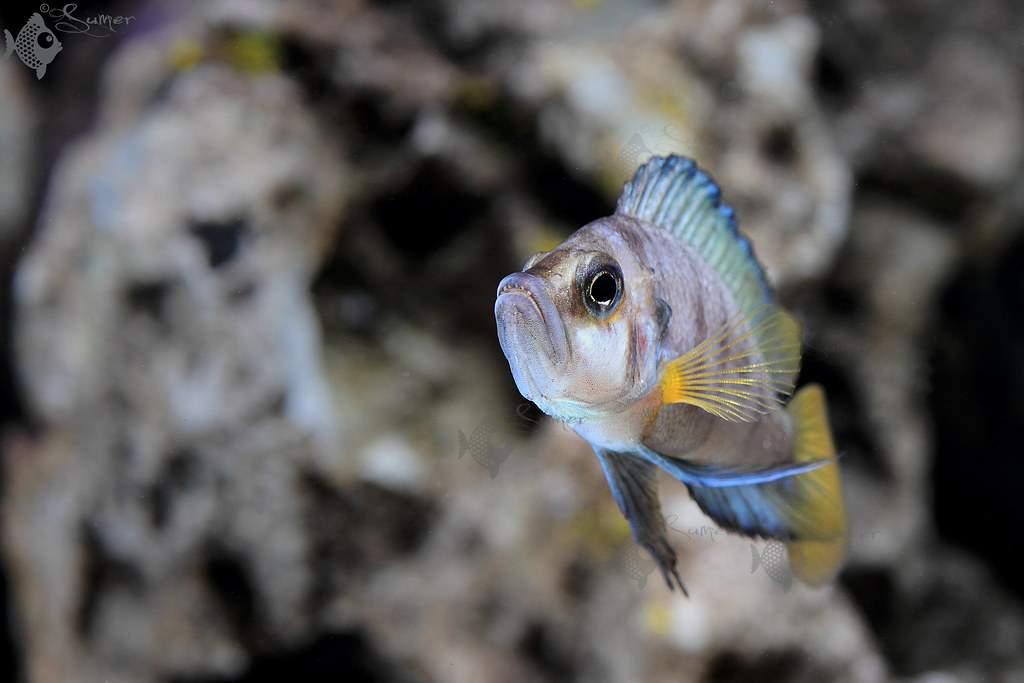 indianaquariumhobbyist com Forums » Post 341820 » A slice of