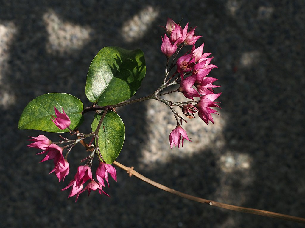 Macro at Orchid Park KL