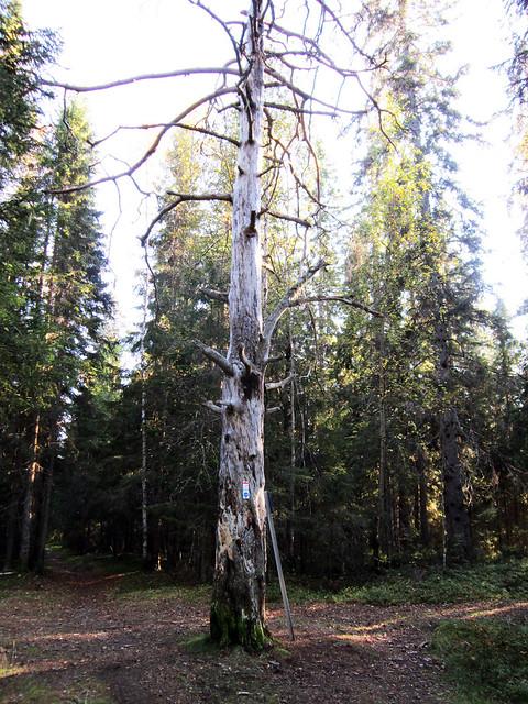 Autumn 2011 - Stortallen