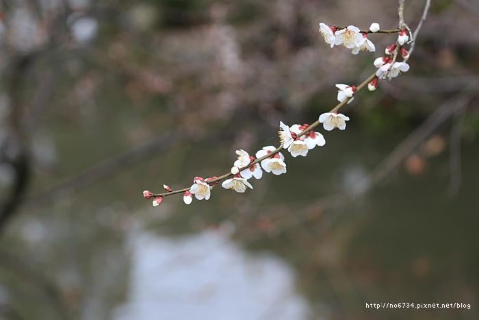 20140301_Fukuoka_0381 f