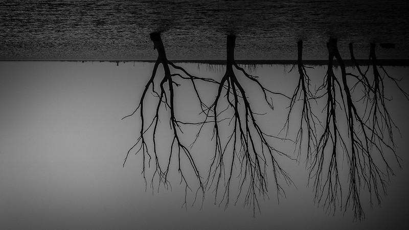 desapareciendo árboles