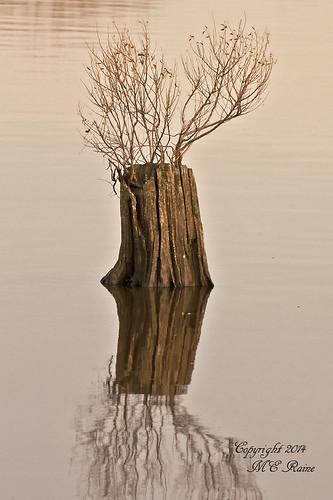 "reflection nature creek wildlife meadowlands stump marsh marsh"" cedarstump ""mill nj"" ""secaucus"