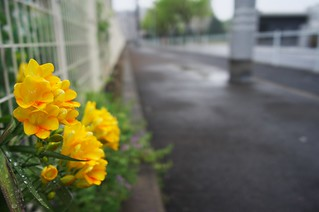 The flowers in commuting 2014/04 No.1.