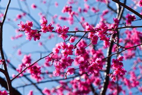 陽明山花卉試驗所-14