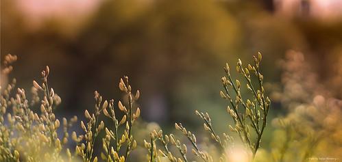 light nature colors beautiful spring dof blossom bokeh pov norrköping flickrexplore konicahexanon sonynex ilobsterit