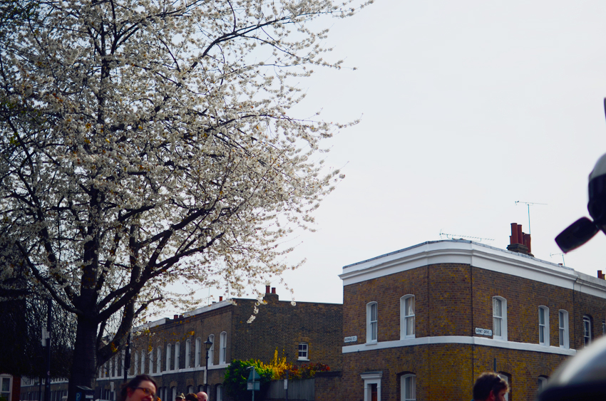 blossoms columbia road a