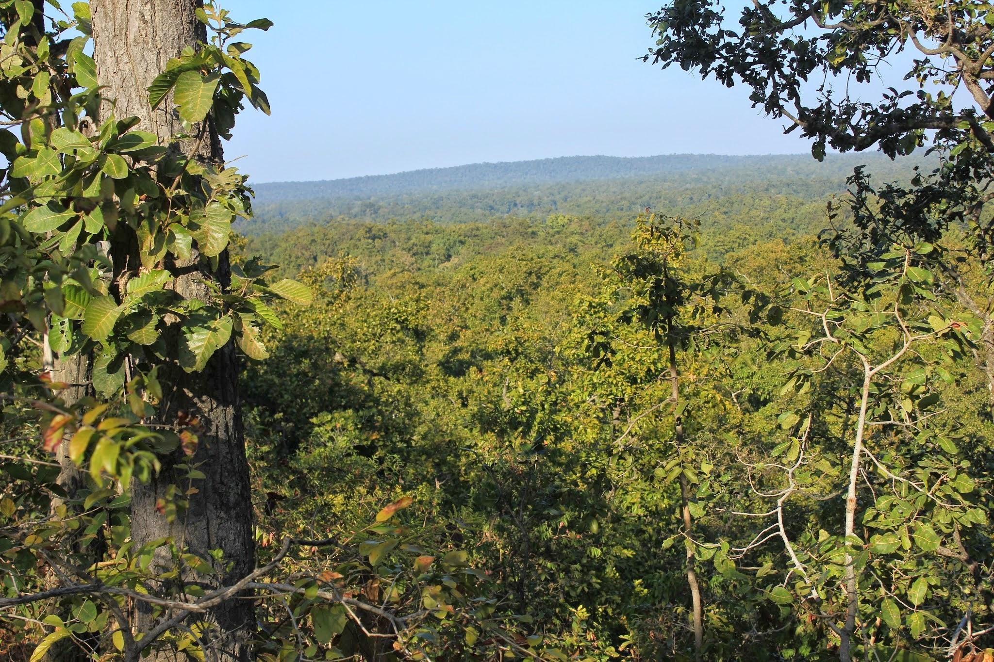 Hasdeo Arand forest in Chhattisgarh.