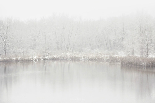 white out - snow and reed