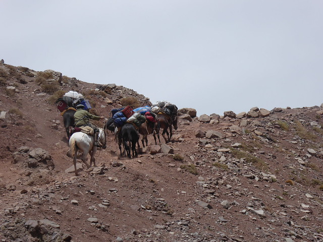 Mule train in the Horcones Valley