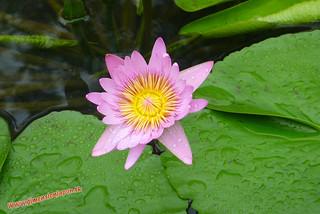 P1060576 Infierno Umi Jigoku (Beppu) 13-07-2010