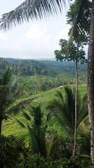 Tabanan , Bali 2015