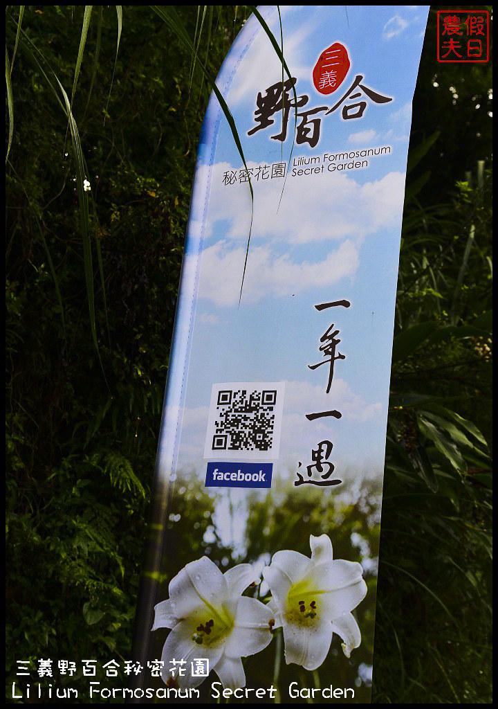 三義野百合秘密花園DSC_2255
