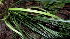 leaf, soil, tree, plant, welsh onion, herb, flora, green,