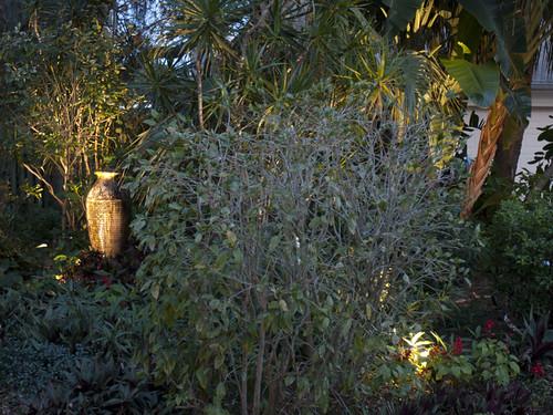 Outdoor Landscape Lighting Trees Palms Plants Sarasota Nokomis