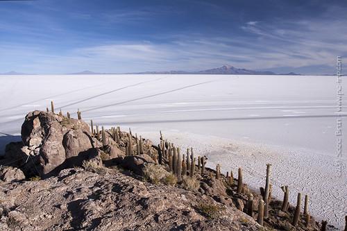 travel cactus flower nature landscape geotagged bolivia bol salar cardon uyuni potosí incahuasi isladelpescado geo:lat=2005593127 phaspani saltflatlake geo:lon=6754394531