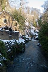 Winter 2013 (Jesmond Dene)  (15)