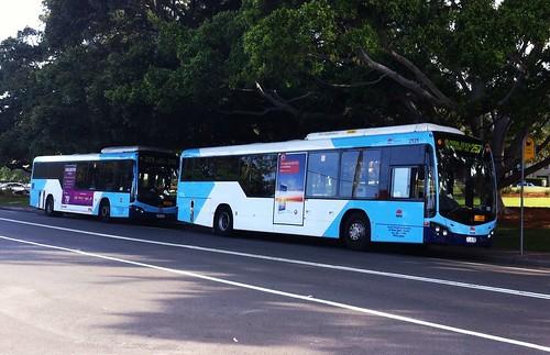 Sydney Buses