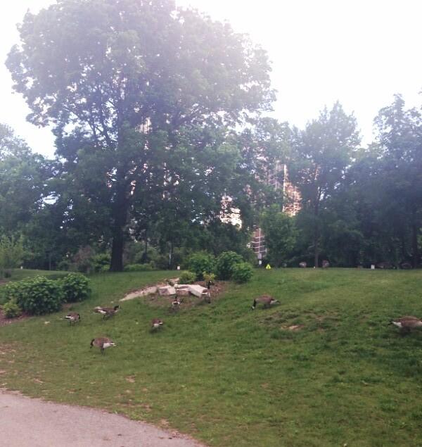 licoln park
