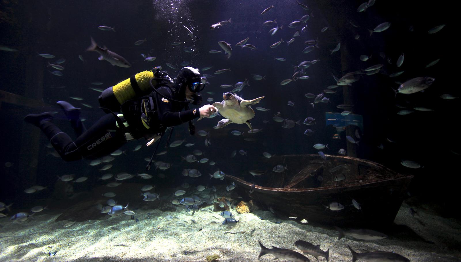 Buceando entre especies marinas en el Oceanogràfic de Valencia. Autor, Ciudad de las Artes y las Ciencias
