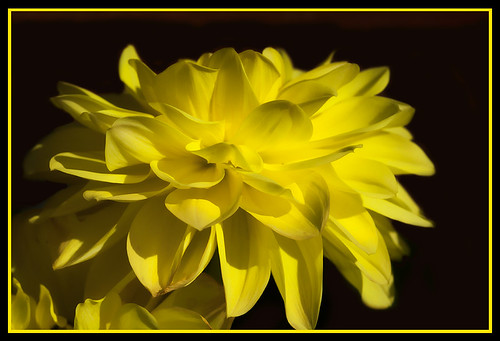 yellow by Angela Taylor .Hello friends