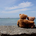 Roscoff bears by Missusdoubleyou