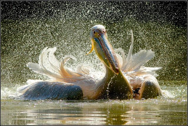 Ogni anima è un fiore che sboccia nella Natura.