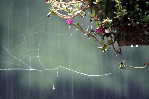 [155/365] Rain, Rain Go Away