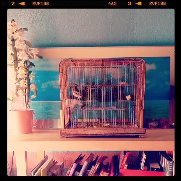 ★ l'orchidée et l'oiseau ont trouver place dans notre maison ★ #blog #blogueuse #ourlittlefamily #france #orchidée #oiseau
