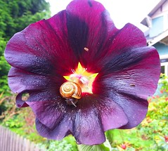 Flower with Snail