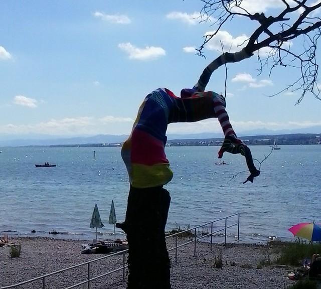 Frierender Baum am Bodensee