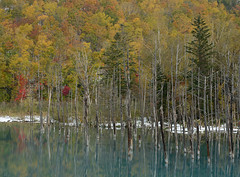 Blue Pond in Biei with Autumn Leaves and First Snow