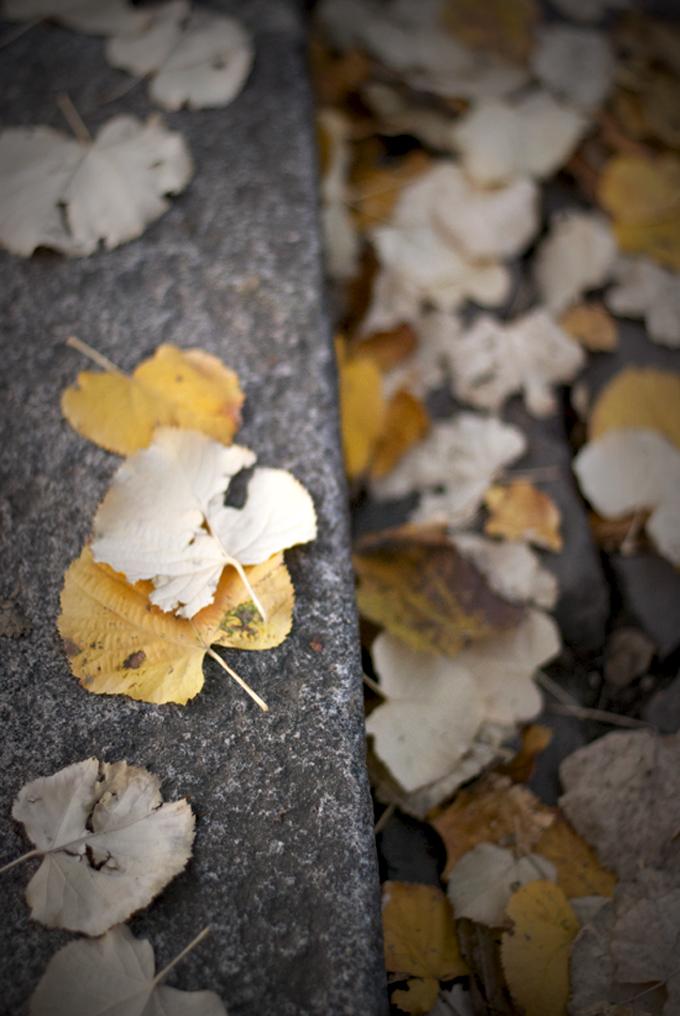 foglie-dettaglio680