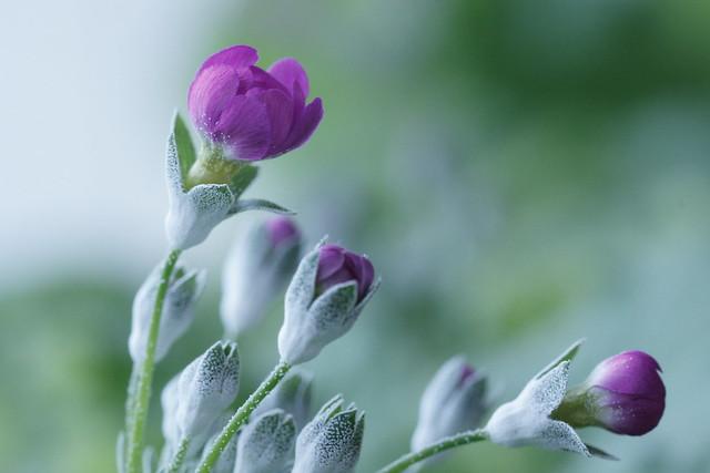 写真_静かに春を待つ2
