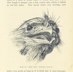 """British Library digitised image from page 68 of """"Among Cannibals. An account of four years' travels in Australia, etc [Translated from the Danish.]"""""""
