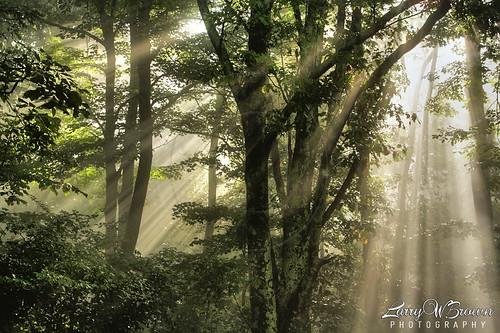forest virginia woodlands sunrays sunbeams shenandoahnationalpark sunlightrays sunlightbeams
