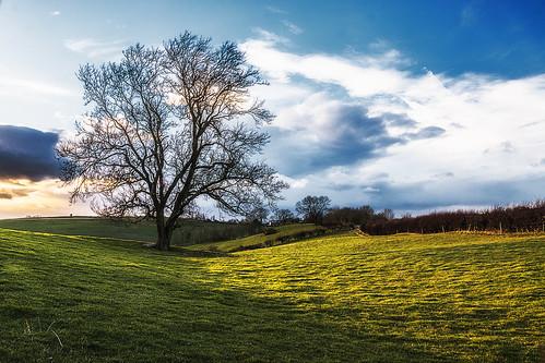 sunset tree canon landscape day cloudy sigma 1750 28 warwickshire burton dassett 40d