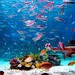 manila Ocean_park_wiki by London (UK) Based a Leading Travel Agency