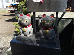 Maneki Neko shrine @ Imado Shrine @ Asakusa