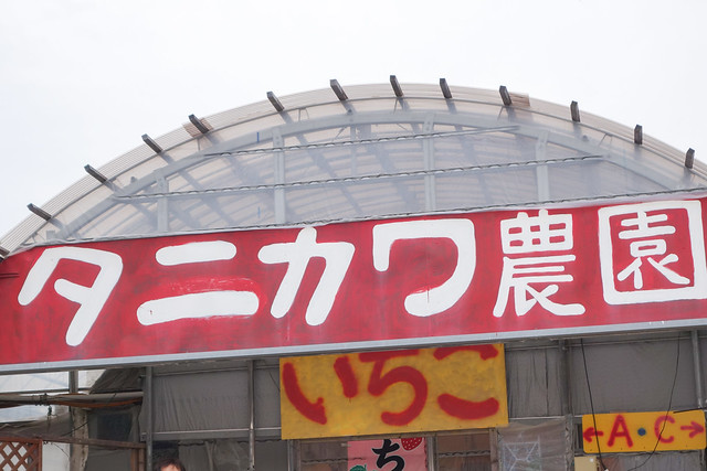 2014_0413_タニカワ農園いちご狩り
