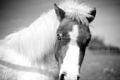intimacy with horses - Photo of Torchefelon