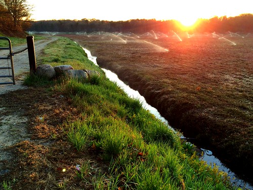 travel usa beautiful sunrise capecod growth cranberries naturevsman