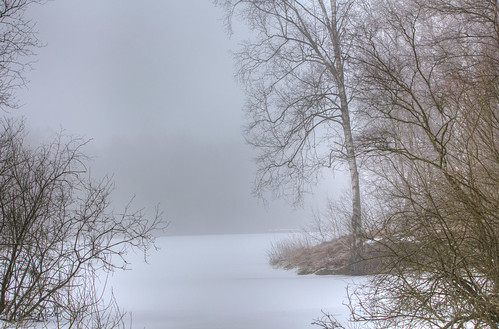 Winter am Moor