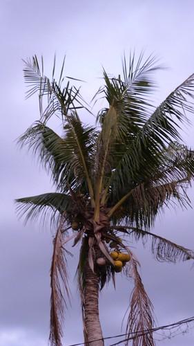 Bali-3-073