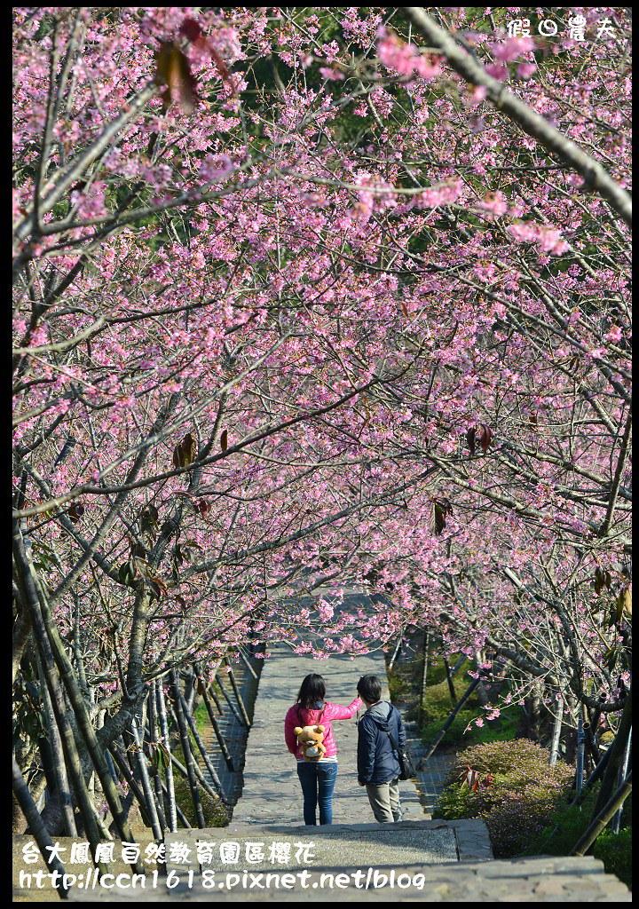 台大鳳凰自然教育園區櫻花DSC_6059