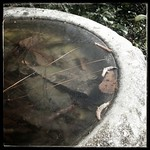 I'd clean those leaves out but it's frozen solid. #birdbath