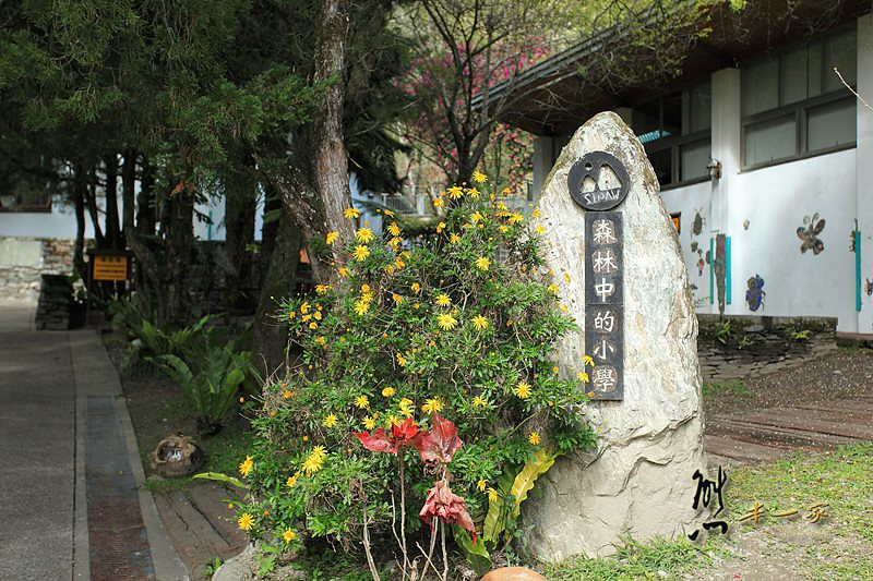 花蓮秀林鄉景點|西寶國小|櫻花梅花盛開~誤打誤撞的新秘境