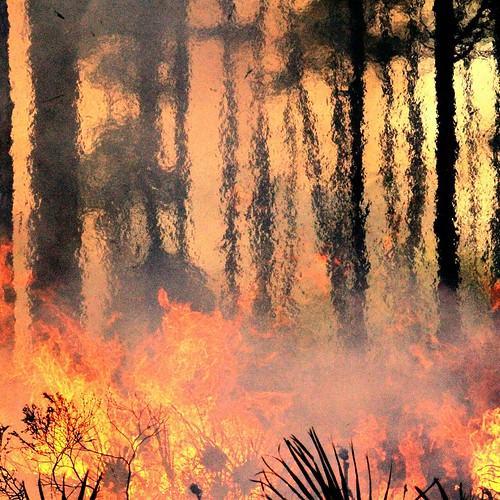 nature canon fire florida wildlife flames puntagorda tamron nationalgeographic tamron70300 7dmarkii canon7dmarkii cecilwebbarea